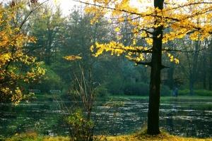 skopje, city park in autumn