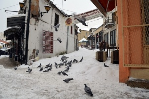 Pigeons dance in the snow