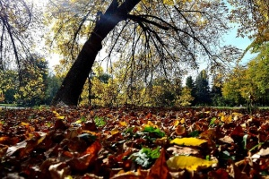 Autumn – time for gold colors and farewells