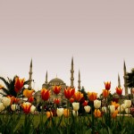 ISTANBUL – CITY OF TULIPS