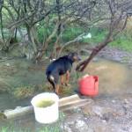 Γιατί οι Έλληνες συμπεριφέρονται με βαρβαρότητα στα ζώα