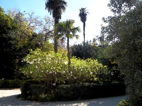 gardens athens8 balkon3