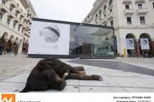 Над 200 документарци на фестивалот во Солун