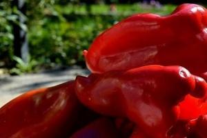 Време за пиперки