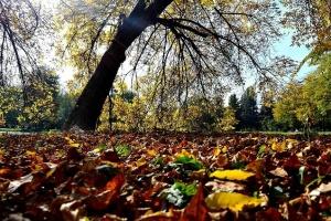 Есен – време на златна боја и разделби