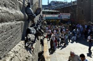 Дивите гулаби одмараат на вертикалниот ѕид на џамијата