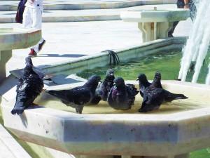 Eyup squere_pigeons_balkon3